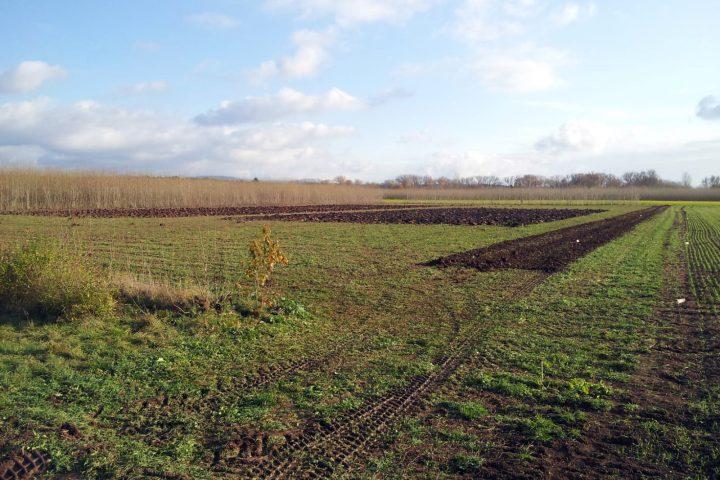 Die neue Solawi-Anbaufläche an der Südflur